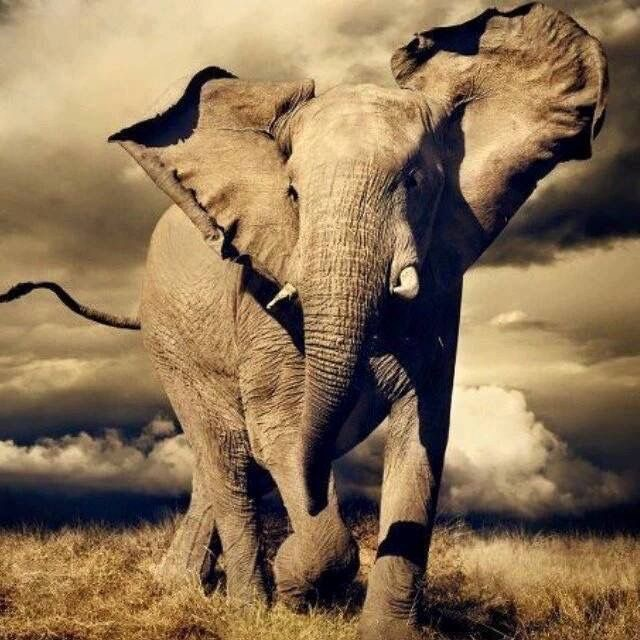 éléphant - Caractère Spécial Architecture
